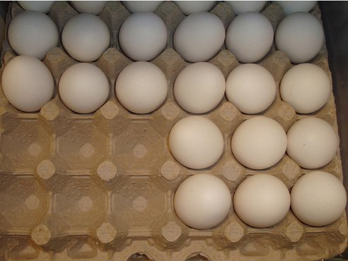 Egg shortage 1